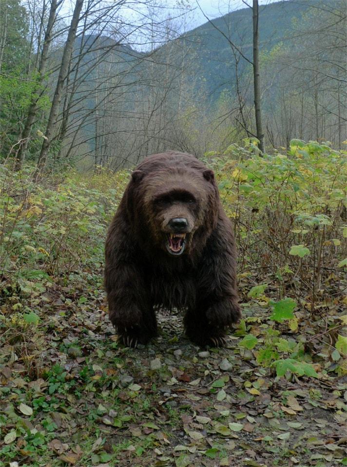 Bear on 4