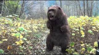 Kodi the Bear practicing Kung-fu