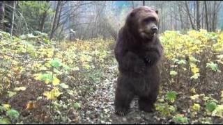 Kodi the Bear rapping