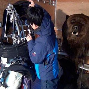 Bear dresser