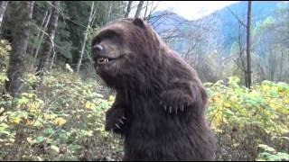 Rising bear