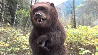 Kodi the Bear practicing for commercials