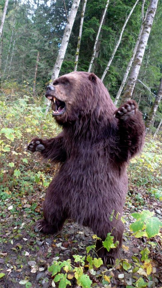 Bear kung-fu fighting